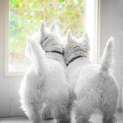 18 Foto Imut Para Anjing dan Kembarannya