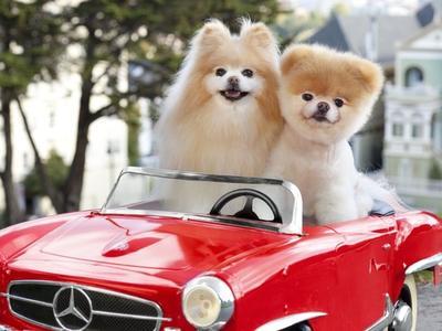 10 Anjing Terpopuler di Instagram yang Ketenarannya Bikin Ngiri