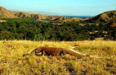 Tempat Wisata Menarik di Taman Nasional Komodo
