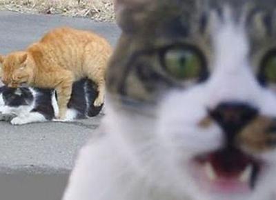 Kucing-Kucing Ini Tertangkap Sedang Bermesraan