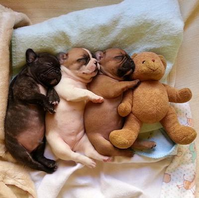 Anak-Anak Anjing yang Tidur dengan Memeluk Boneka Kesayangannya