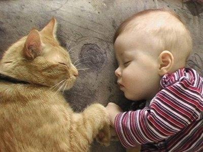 21 Video Lucu antara Kucing dan Bayi (Part 1)
