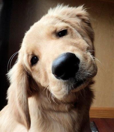 Hal Sederhana yang Masih Menjadi Pertanyaan Bagi Para Anjing Hingga Saat Ini