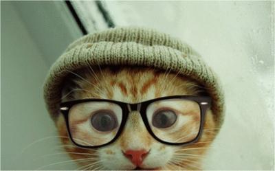 Foto-Foto Berikut Membuktikan Bahwa Kacamata Adalah Style yang Cocok untuk Kucing (Part 1)