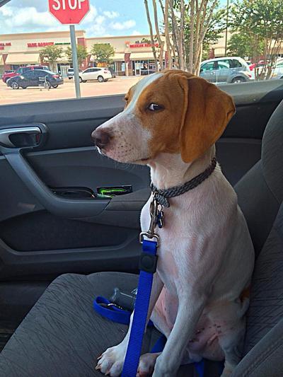 Ekspresi Lucu Para Anjing Saat Berada di Dokter Hewan (Part 1)