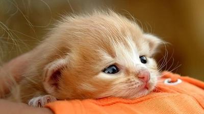 Gemasnya Melihat Bayi-Bayi Binatang Imut Ini! (Part 1)