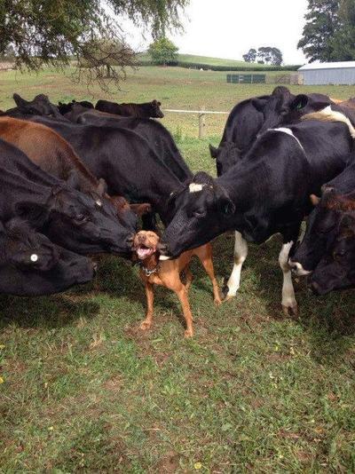 8 Adegan Ciuman Hewan yang Paling Manis Untuk Dilihat
