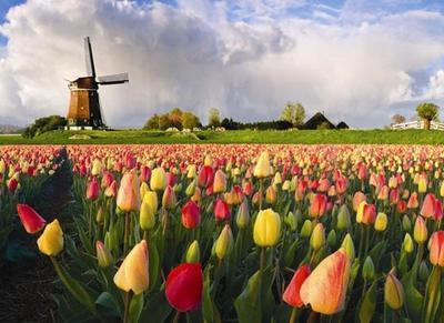 Yuk, Kunjungi 7 Taman Bunga Paling Indah di Dunia