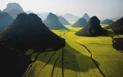 Canola Flower Fields, Yunnan,Tiongkok