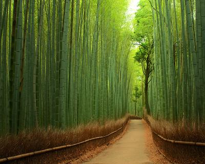 14. Bamboo Forest, Kyoto, Jepang