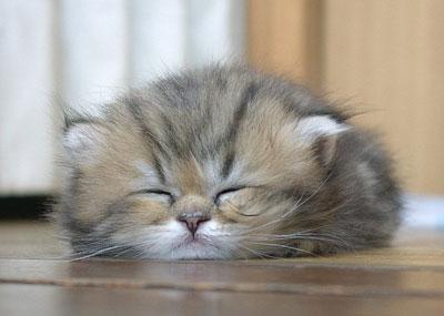 Saat Kucing Tak Bisa Menahan Kantuk
