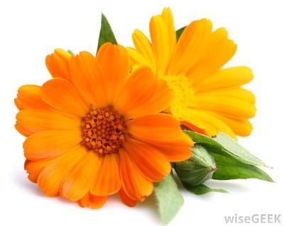 3. Marigold