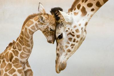 Momen-Momen Parenting Paling Indah di Dunia Hewan