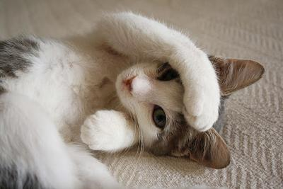 8 Video Lucu Ketika Kucing Tertidur