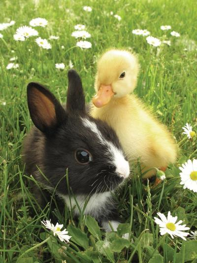 Hewan dalam Kebersamaan (Part 2)