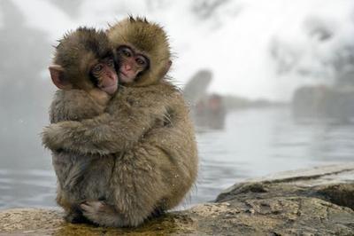 Hewan dalam Kebersamaan (Part 3)