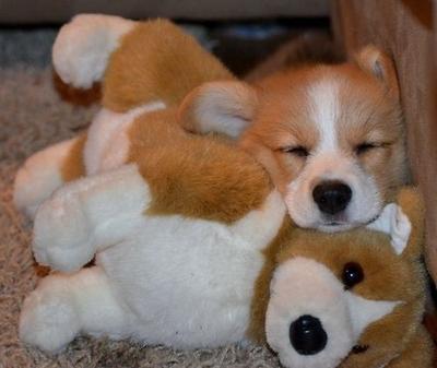 Pose Menggemaskan Para Anjing Saat Bermain dengan Boneka Mereka (Part 2)