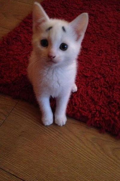 Berkenalan dengan Gary! Kucing Imut yang Selalu Terlihat Kebingungan