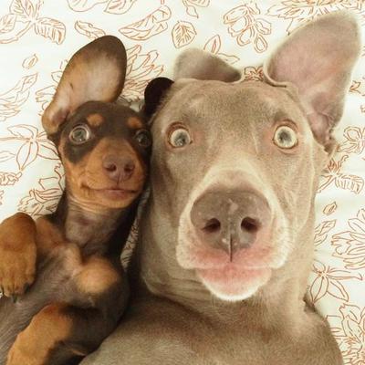 Lihat Tingkah Hewan-Hewan yang Hobi Selfie Ini! (Part 1)
