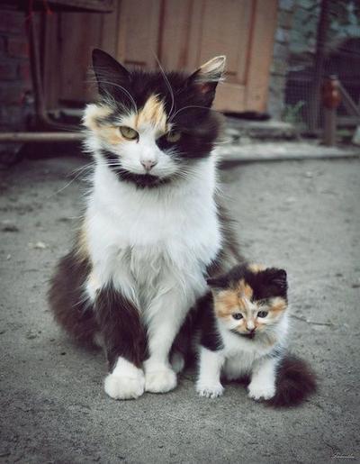 Berani Ganggu Putri Kecilku? Langkahi Dulu Mayatku. Rrrrrrrrr!