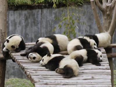 Pose tidur beramai-ramai yang tidak beraturan ini nih yang bikin gemes.