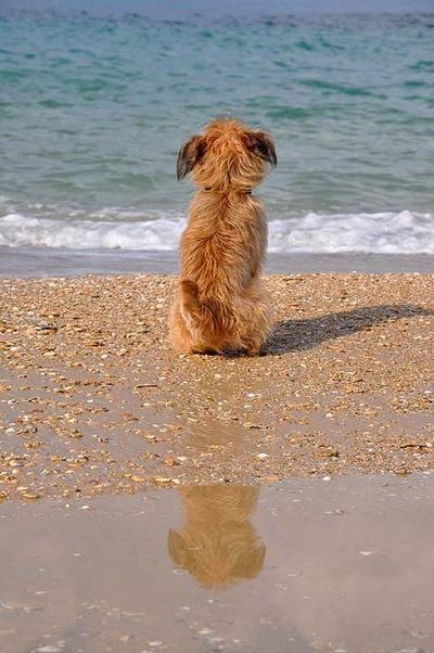 """""""Deburan ombak di pantai ini mengingatkanku kala itu.."""""""