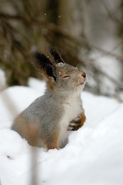 Tupai ini menikmati salju musim dingin dengan sepenuh hati.
