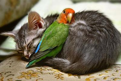 Burung & Kucing