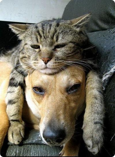 Anjing & Kucing