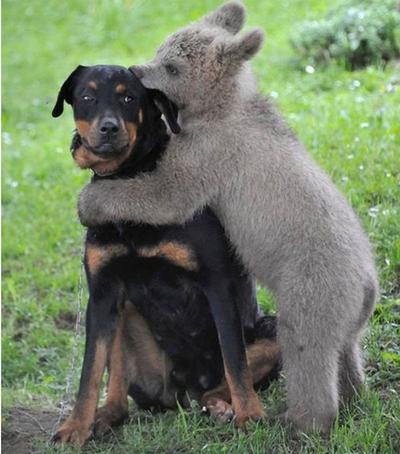 Beruang & Anjing