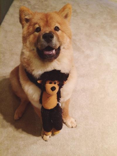 """""""Coba lihat ini! Ayah dan ibu membelikanku sebuah boneka monyet yang lucu!"""""""