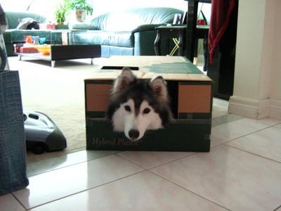 Kotak kardus juga menjadi hal yang menarik baginya