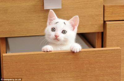 �gBu, laci ini kenapa tidak ada isinya?�h