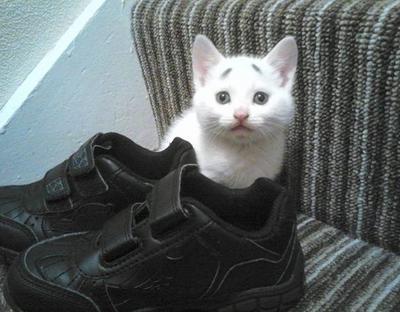 �gAku lihat sepatumu di sini, apakah kau mau pergi?�h