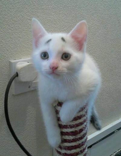 """""""Apa kau yakin kabel ini masih aman untuk dipakai?"""