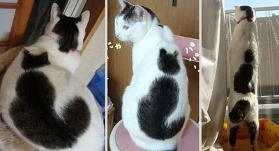 Cat on cat!
