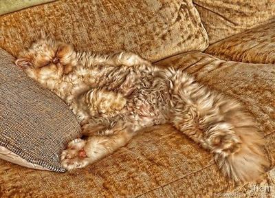 Sofa dengan motif kucing atau..?