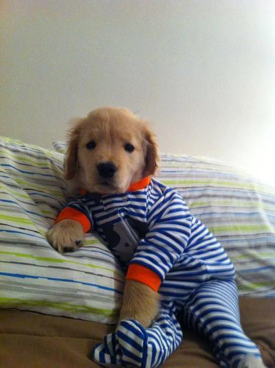 """""""Aku masih mengantuk..bolehkah aku tidur sebentar lagi?"""""""