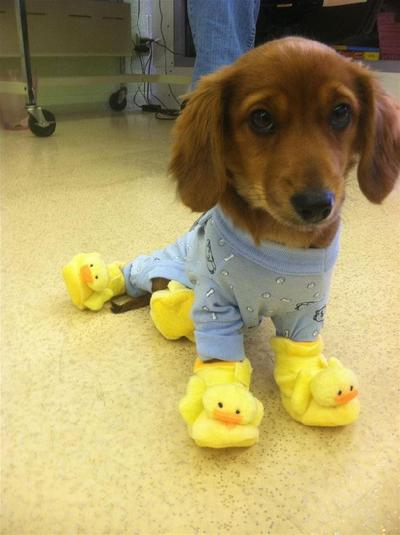 """Blue pajamas and duck slippers, yeay!"""