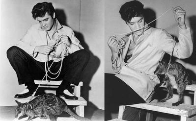 Elvis Presley dan Kanguru