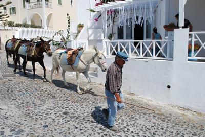 8. Keliling Naik Keledai