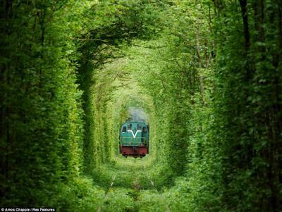 Terowongan Cinta, Tempat Paling Cocok untuk Mengisi Ulang Kekuatan Cintamu