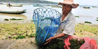 Mata Pencaharian Penduduk Nusa Lembongan