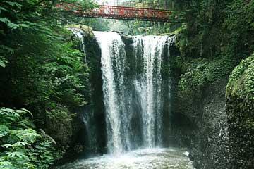 Serunya Menjelajahi Pesona Taman Hutan Raya Djuanda, Bandung