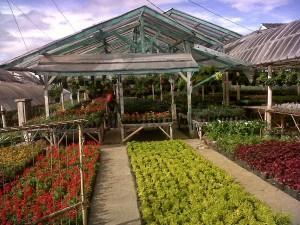 Taman Bunga Parongpong