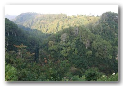 Pengenalan Singkat Mengenai Taman Hutan Raya Djuanda