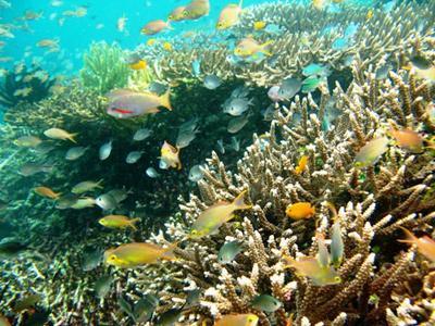 Keanekaragaman Biota Laut