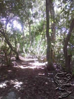 Berbagai Jenis Flora di Pulau Pombo