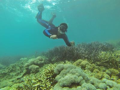 Pemandangan Bawah Laut Pulau Sangiang