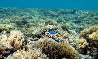 Apa Saja yang Bisa Dilakukan di Pulau Samalona?